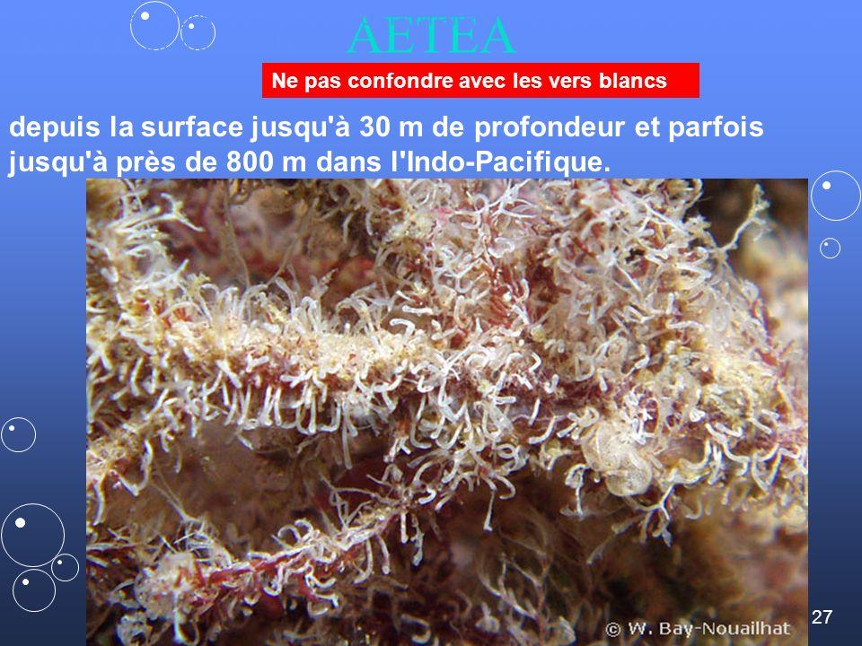 27 AETEA sur les algues rouges, les crampons de laminaires mais aussi sur d autres bryozoaires, des hydraires ou des coquilles depuis la surface jusqu à 30 m de profondeur et parfois jusqu à près de 800 m dans l Indo-Pacifique.