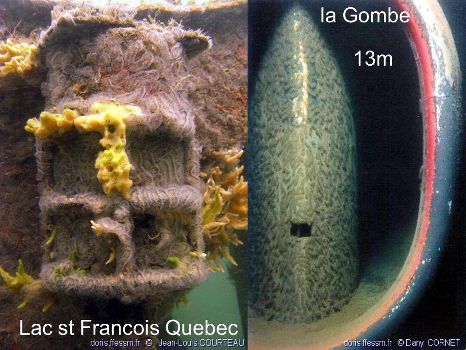 63 Lac st Francois Quebec la Gombe 13m