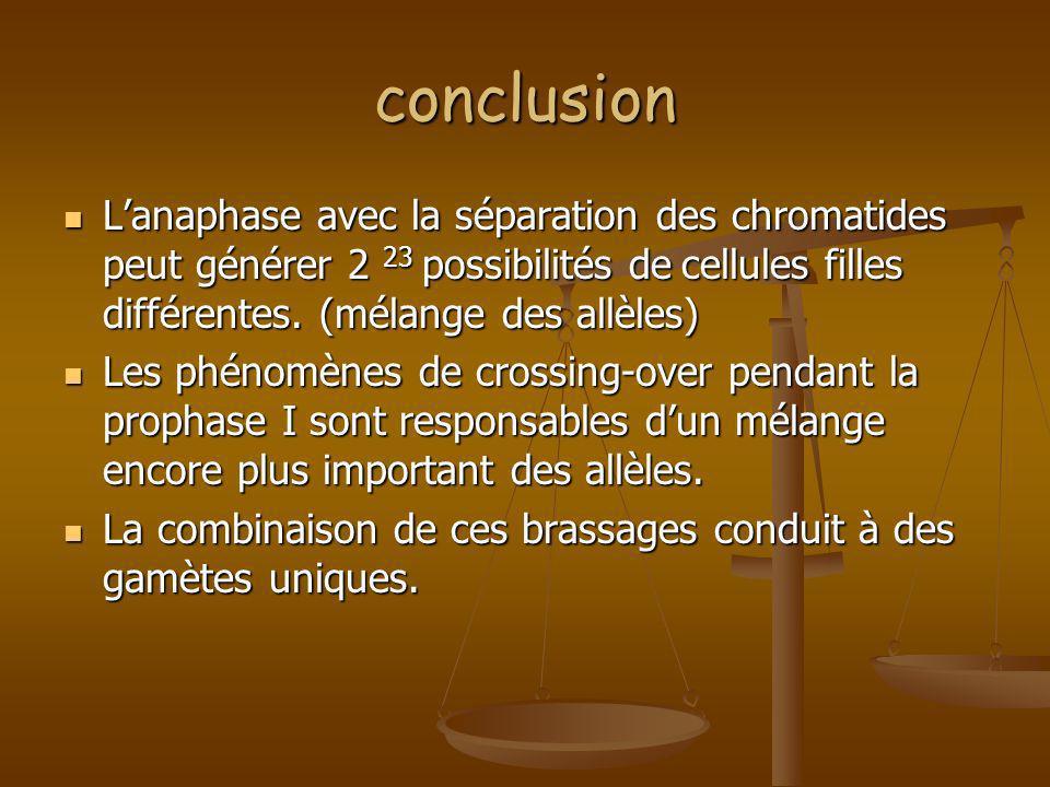 conclusion Lanaphase avec la séparation des chromatides peut générer 2 23 possibilités de cellules filles différentes. (mélange des allèles) Lanaphase