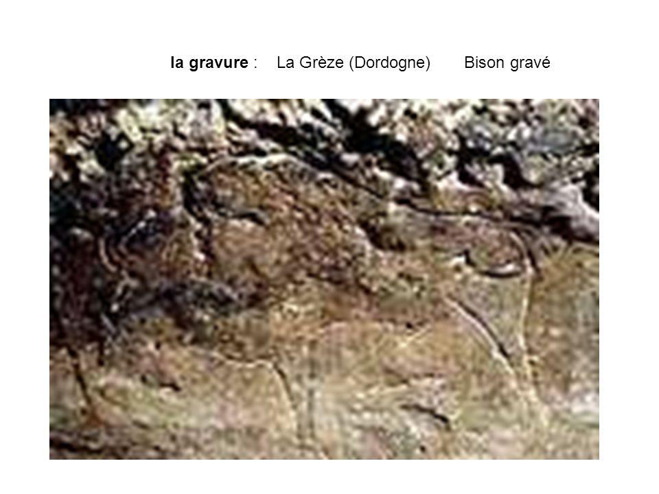 la gravure : La Grèze (Dordogne) Bison gravé