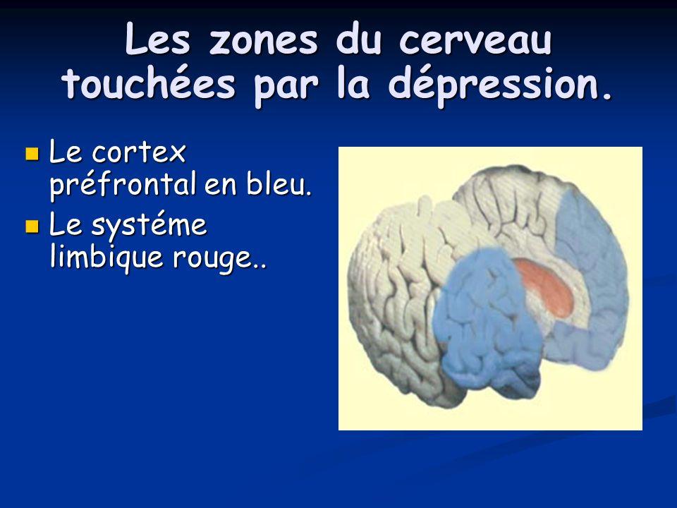 Les zones du cerveau touchées par la dépression. Le cortex préfrontal en bleu. Le cortex préfrontal en bleu. Le systéme limbique rouge.. Le systéme li