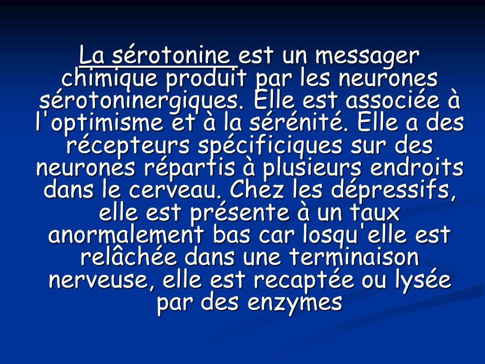 La sérotonine est un messager chimique produit par les neurones sérotoninergiques. Elle est associée à l'optimisme et à la sérénité. Elle a des récept