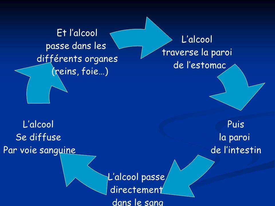 Et lalcool passe dans les différents organes (reins, foie…) Lalcool passe directement dans le sang Lalcool traverse la paroi de lestomac Lalcool Se di
