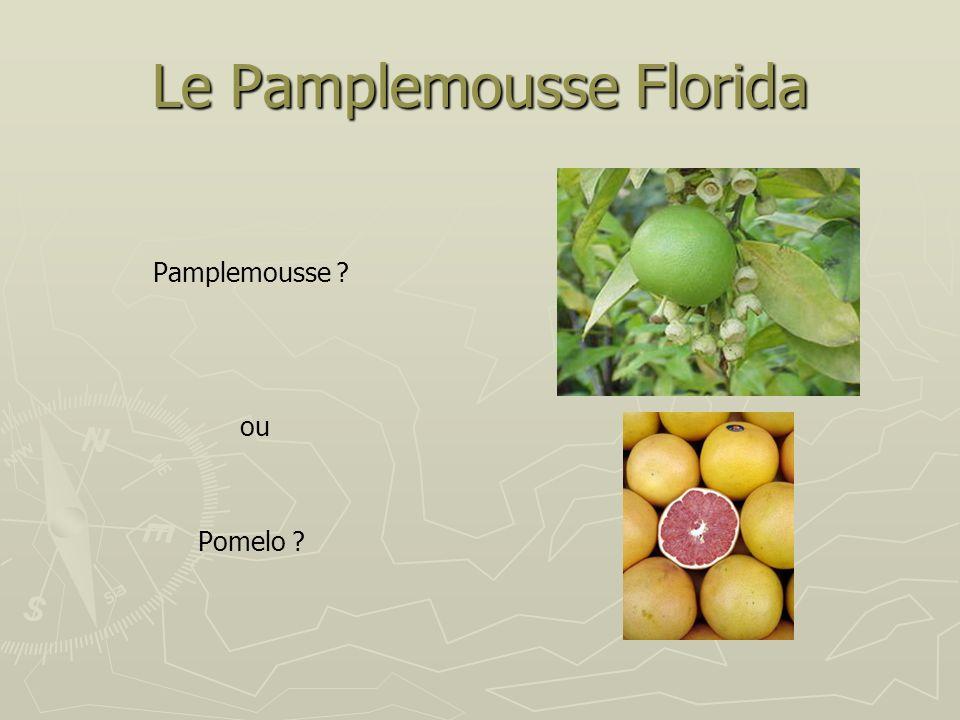 Le Pamplemousse Florida Pamplemousse ? ou Pomelo ?