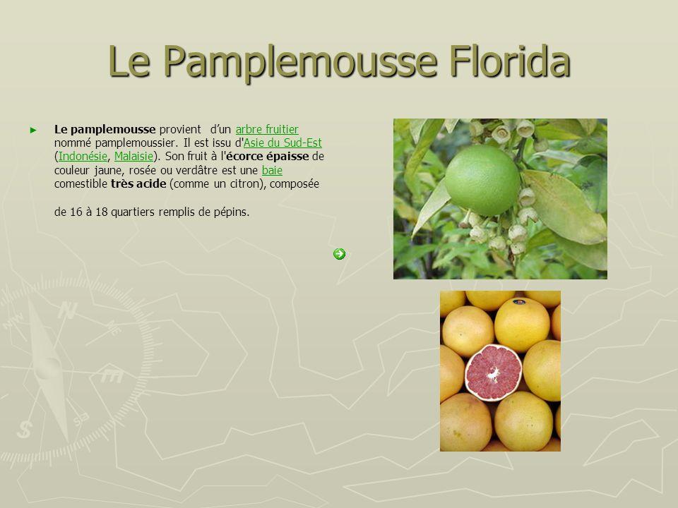 Le Pamplemousse Florida Le pamplemousse provient dun arbre fruitier nommé pamplemoussier. Il est issu d'Asie du Sud-Est (Indonésie, Malaisie). Son fru