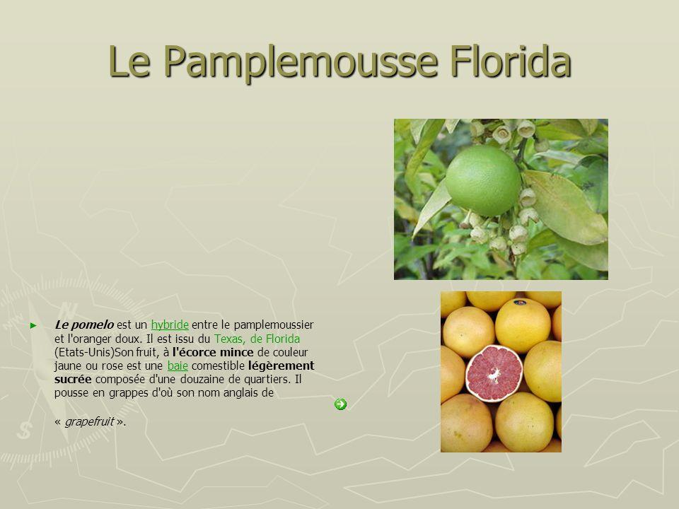 Le Pamplemousse Florida Le pomelo est un hybride entre le pamplemoussier et l'oranger doux. Il est issu du Texas, de Florida (Etats-Unis)Son fruit, à