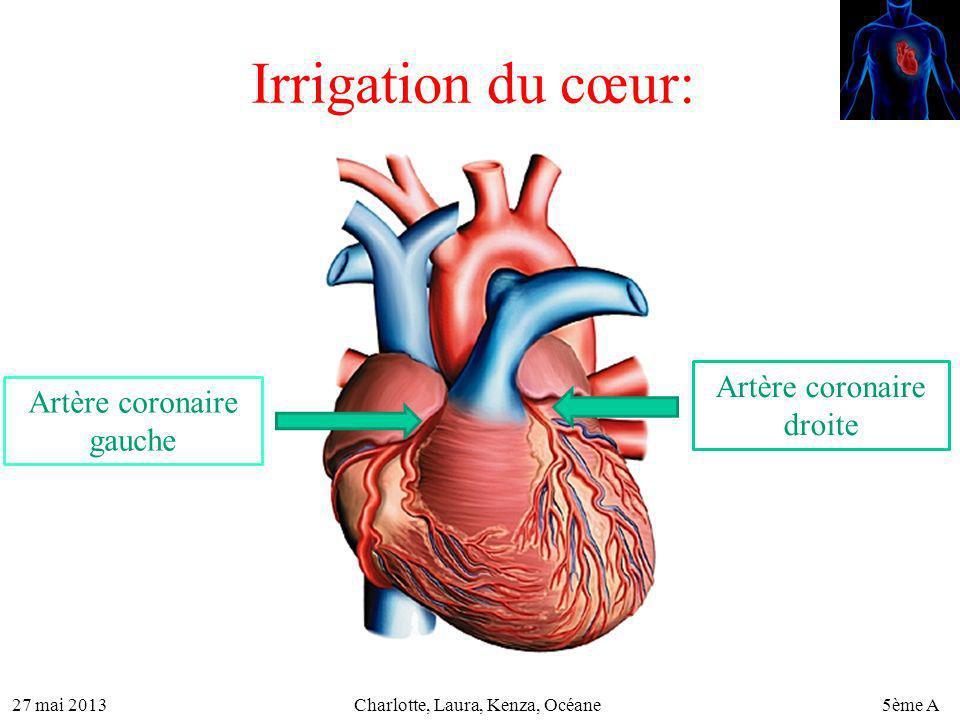 27 mai 20135ème ACharlotte, Laura, Kenza, Océane Irrigation du cœur: Artère coronaire gauche Artère coronaire droite