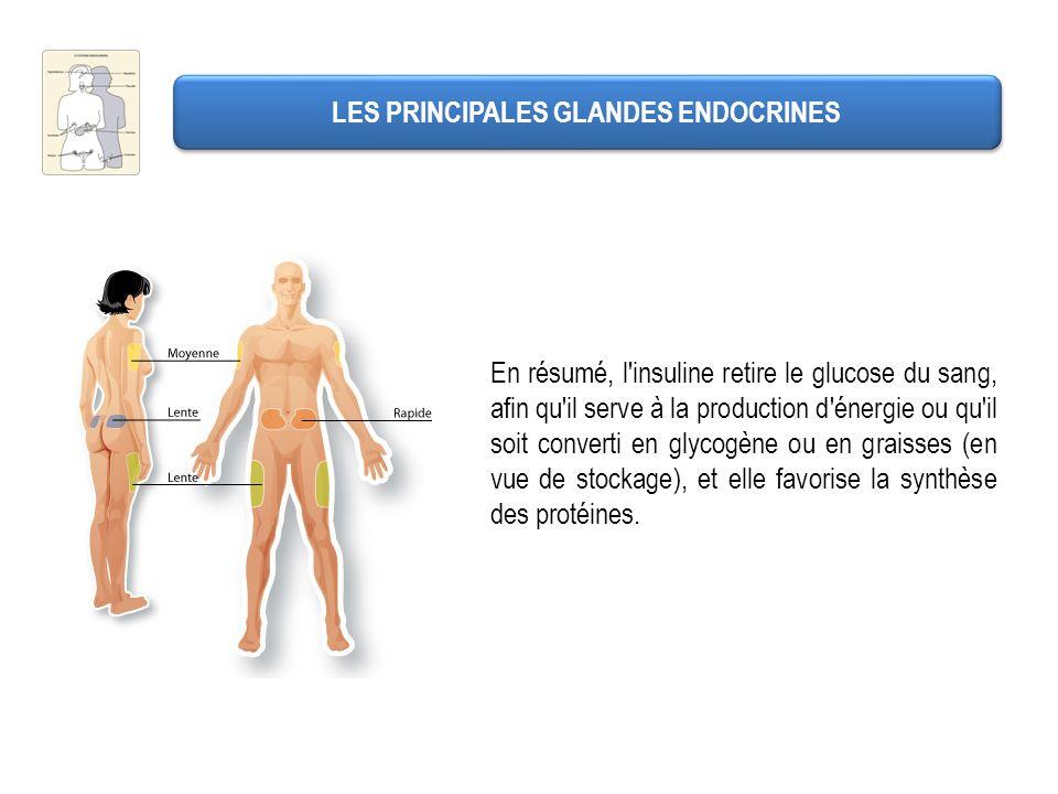 En résumé, l'insuline retire le glucose du sang, afin qu'il serve à la production d'énergie ou qu'il soit converti en glycogène ou en graisses (en vue
