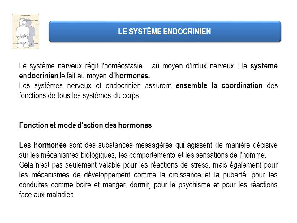 LES PRINCIPALES GLANDES ENDOCRINES L adrénaline et la noradrénaline : appelées catécholamines.