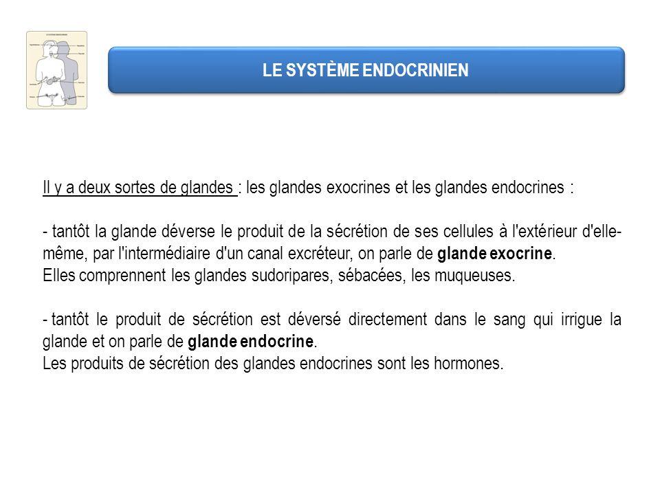 LES PRINCIPALES GLANDES ENDOCRINES Le pancréas Il est à la fois glande exocrine et glande endocrine.