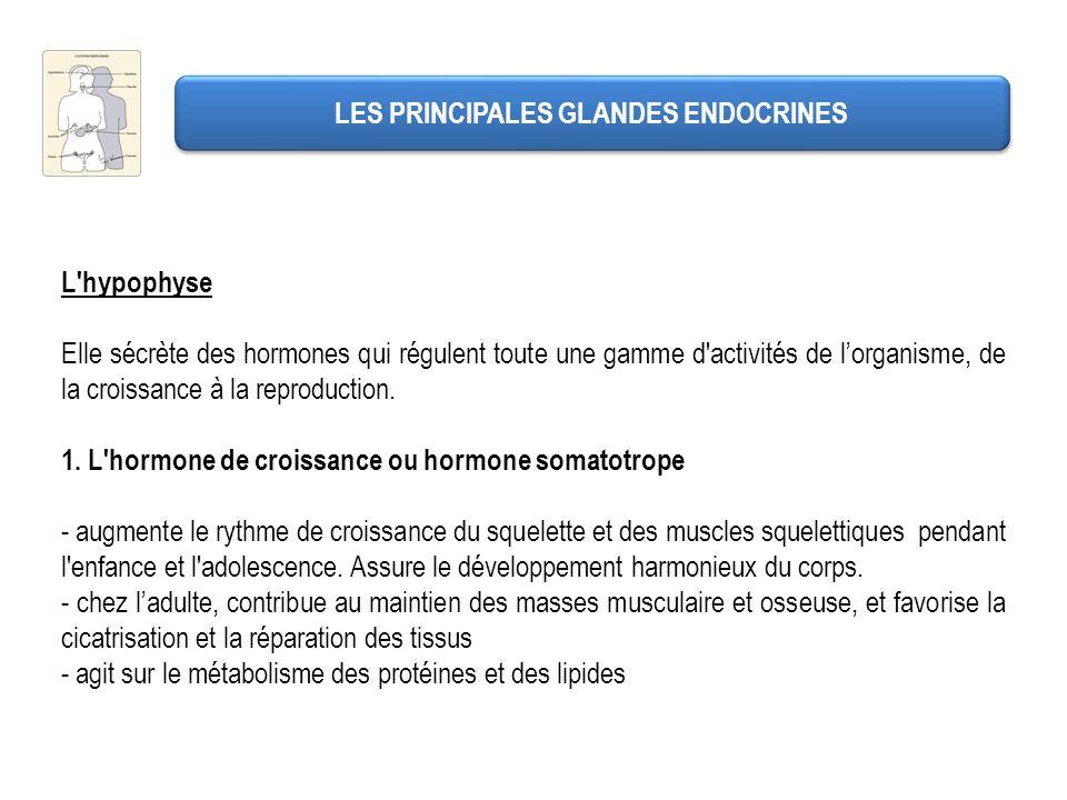LES PRINCIPALES GLANDES ENDOCRINES - influe sur le métabolisme des glucides.