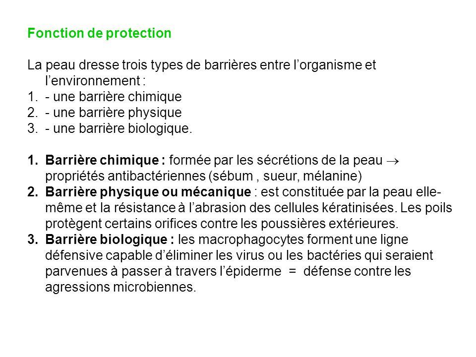 Fonction de protection La peau dresse trois types de barrières entre lorganisme et lenvironnement : 1.- une barrière chimique 2.- une barrière physiqu