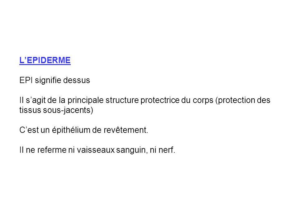 LEPIDERME EPI signifie dessus Il sagit de la principale structure protectrice du corps (protection des tissus sous-jacents) Cest un épithélium de revê