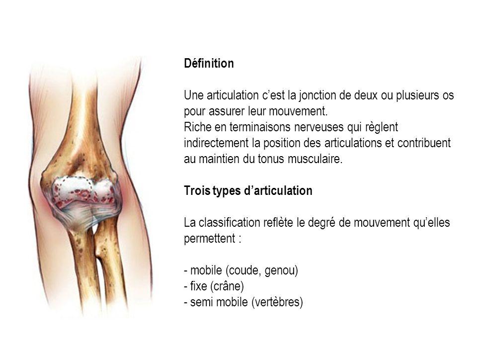 Définition Une articulation cest la jonction de deux ou plusieurs os pour assurer leur mouvement.