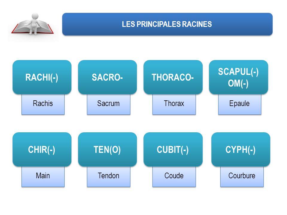 Coude Tendon Main Epaule Thorax Sacrum Rachis LES PRINCIPALES RACINES RACHI(-) SACRO- THORACO- SCAPUL(-) OM(-) SCAPUL(-) OM(-) CHIR(-) TEN(O) CUBIT(-) Courbure CYPH(-)