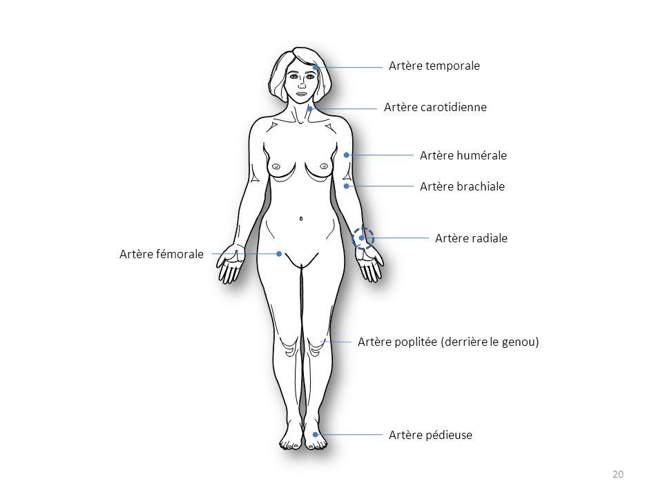 20 Artère temporale Artère carotidienne Artère brachiale Artère radiale Artère humérale Artère poplitée (derrière le genou) Artère pédieuse Artère fém