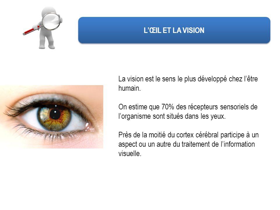 LŒIL ET LA VISION La vision est le sens le plus développé chez lêtre humain. On estime que 70% des récepteurs sensoriels de lorganisme sont situés dan