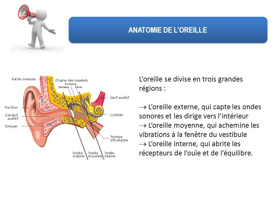 ANATOMIE DE LOREILLE Loreille se divise en trois grandes régions : Loreille externe, qui capte les ondes sonores et les dirige vers lintérieur Loreill