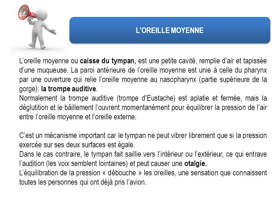LOREILLE MOYENNE Loreille moyenne ou caisse du tympan, est une petite cavité, remplie dair et tapissée dune muqueuse. La paroi antérieure de loreille