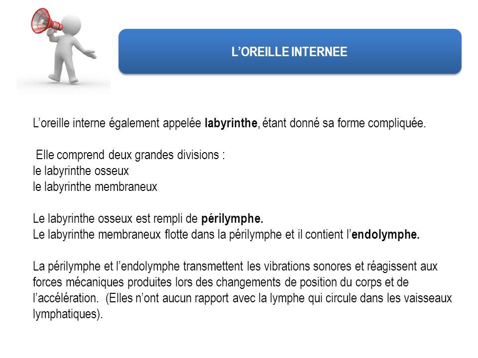 LOREILLE INTERNEE Loreille interne également appelée labyrinthe, étant donné sa forme compliquée. Elle comprend deux grandes divisions : le labyrinthe