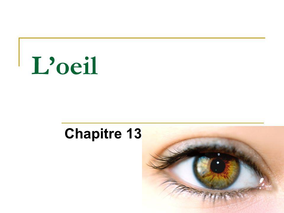 Loeil Chapitre 13
