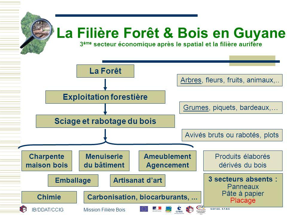 La Filière Forêt & Bois en Guyane 3 ème secteur économique après le spatial et la filière aurifère La Forêt Exploitation forestière Sciage et rabotage