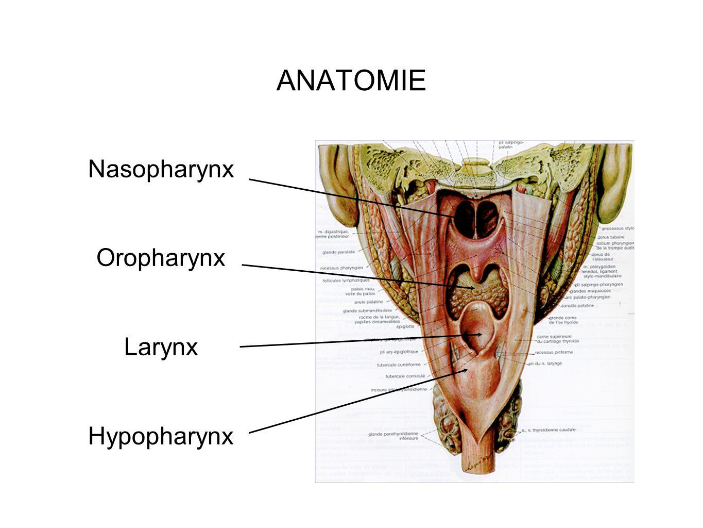 ANATOMIE Nasopharynx Oropharynx Larynx Hypopharynx