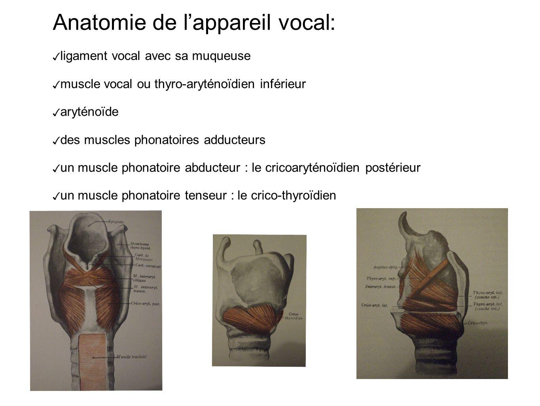 Anatomie de lappareil vocal: ligament vocal avec sa muqueuse muscle vocal ou thyro-aryténoïdien inférieur aryténoïde des muscles phonatoires adducteurs un muscle phonatoire abducteur : le cricoaryténoïdien postérieur un muscle phonatoire tenseur : le crico-thyroïdien