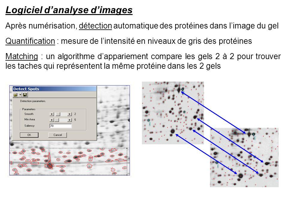 Logiciel danalyse dimages Après numérisation, détection automatique des protéines dans limage du gel Quantification : mesure de lintensité en niveaux