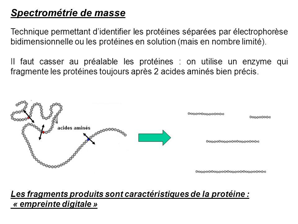 Spectrométrie de masse Technique permettant didentifier les protéines séparées par électrophorèse bidimensionnelle ou les protéines en solution (mais