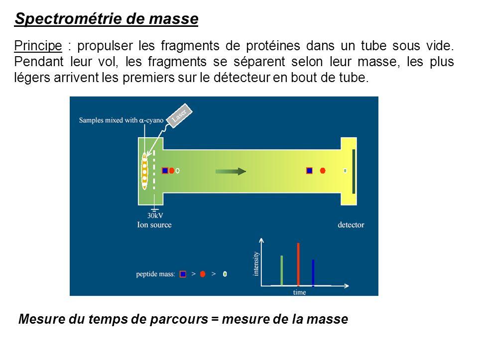 Principe : propulser les fragments de protéines dans un tube sous vide. Pendant leur vol, les fragments se séparent selon leur masse, les plus légers