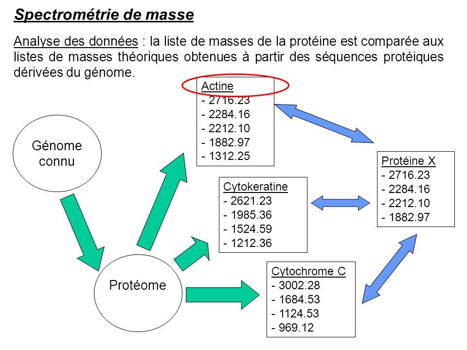 Analyse des données : la liste de masses de la protéine est comparée aux listes de masses théoriques obtenues à partir des séquences protéiques dérivé