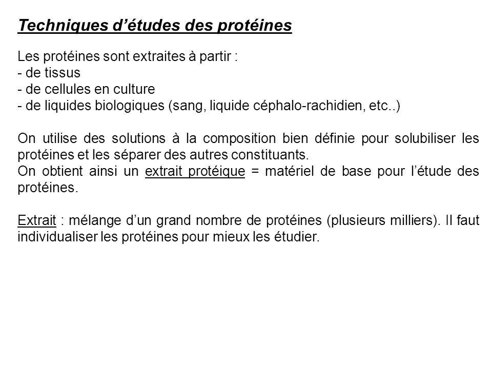Techniques détudes des protéines Les protéines sont extraites à partir : - de tissus - de cellules en culture - de liquides biologiques (sang, liquide