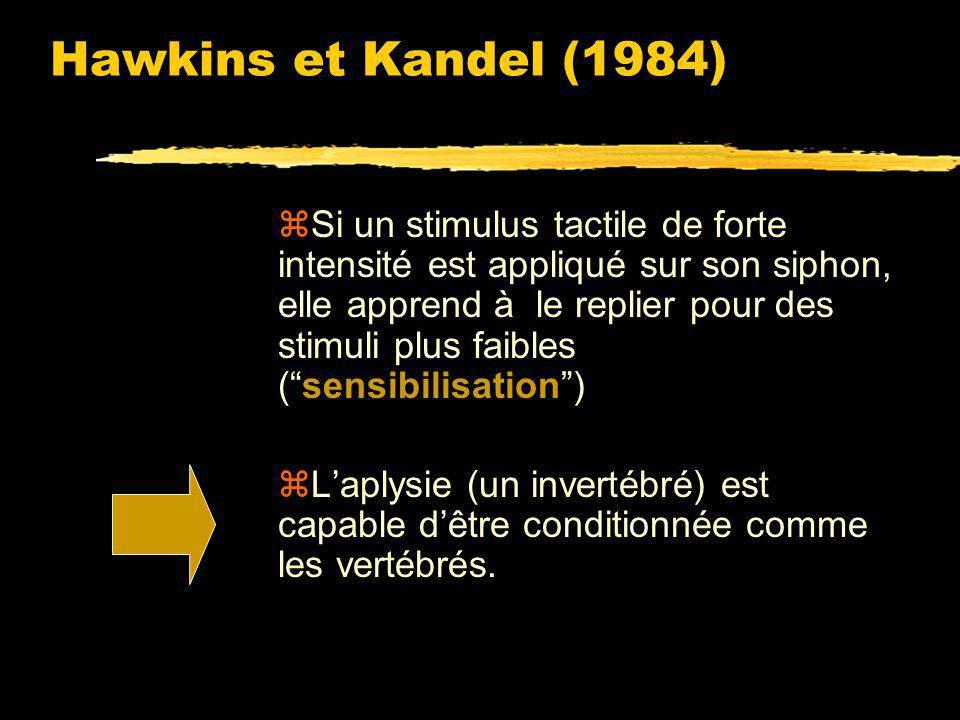 Hawkins et Kandel (1984) ont montré que ce réflexe pouvait être modifié par apprentissage. zSi un stimulus tactile de faible intensité est appliqué su