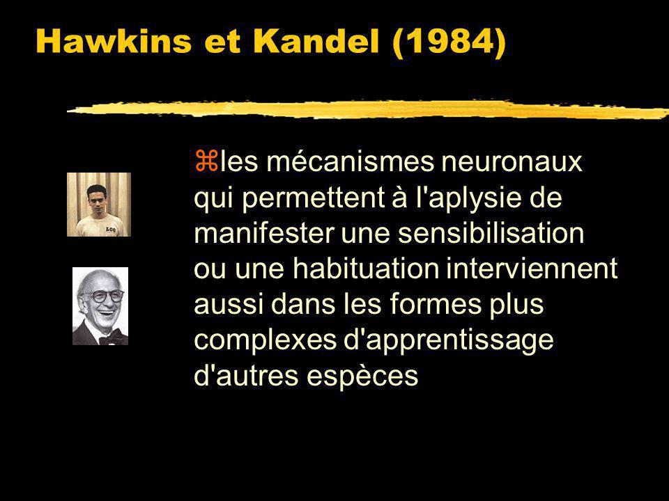 Hawkins et Kandel (1984) zSi un stimulus tactile de forte intensité est appliqué sur son siphon, elle apprend à le replier pour des stimuli plus faibles (sensibilisation) zLaplysie (un invertébré) est capable dêtre conditionnée comme les vertébrés.