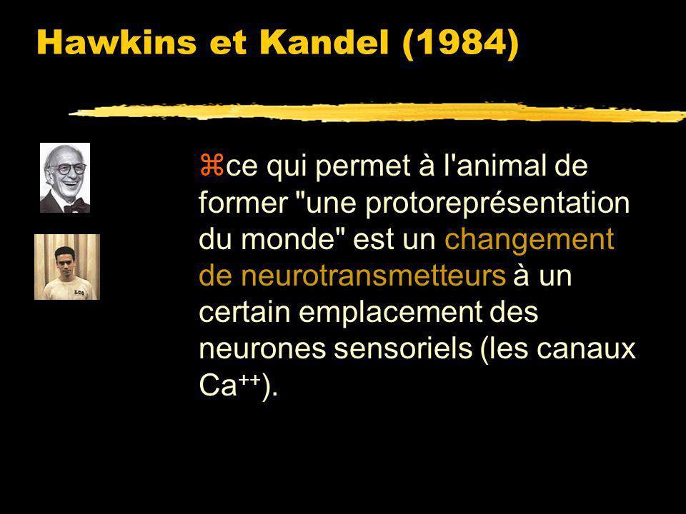 Hawkins et Kandel (1984) zles mécanismes neuronaux qui permettent à l'aplysie de manifester une sensibilisation ou une habituation interviennent aussi