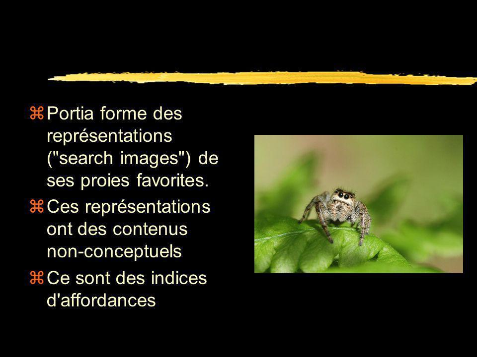 zAraignée salticide Portia Labiata zPrédateur d'autres araignées zPeut travailler hors de sa toile zVision haute résolution