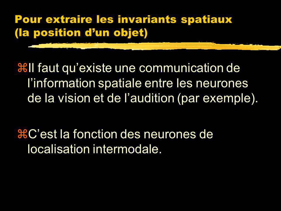 audition vision Invariant spatial