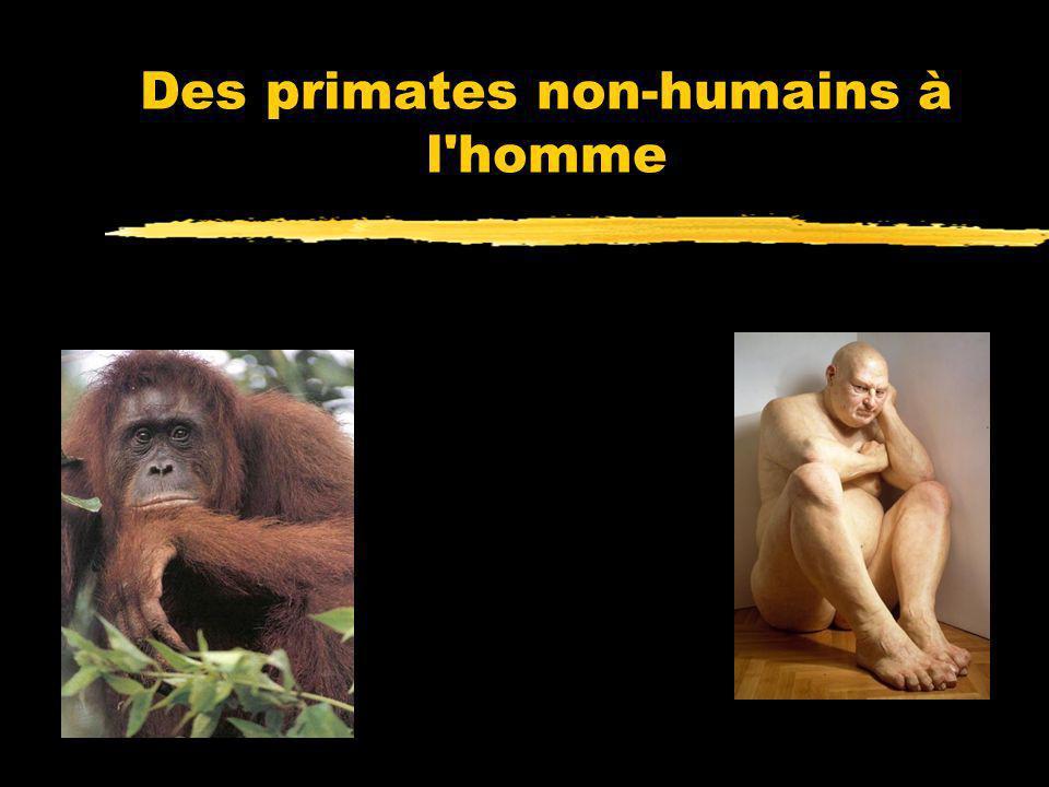 Les Chimpanzés sont des rivaux, pas des coopérateurs zCall & al., 1998 : les chimpanzés nutilisent pas la direction du regard ou le pointage par autru