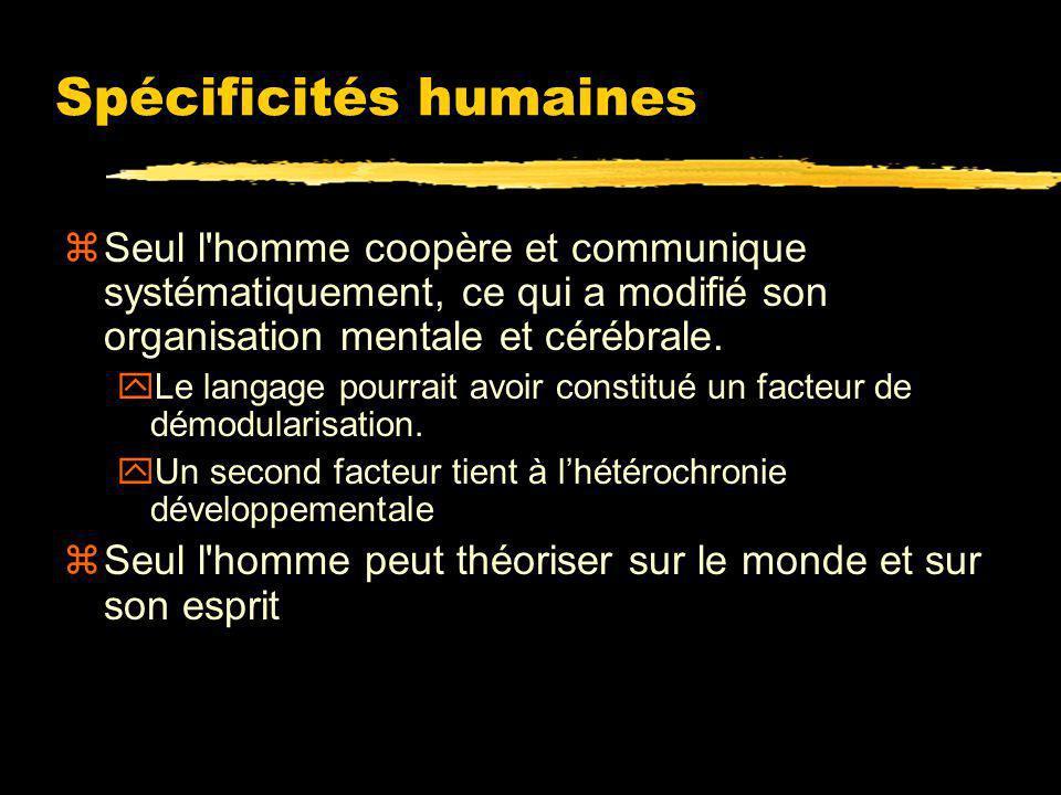 Des primates non-humains à l homme