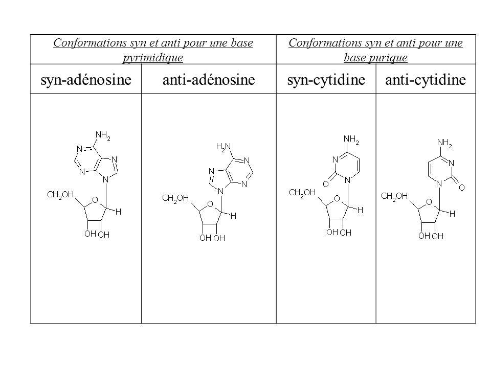 Conformations syn et anti pour une base pyrimidique Conformations syn et anti pour une base purique syn-adénosineanti-adénosinesyn-cytidineanti-cytidi