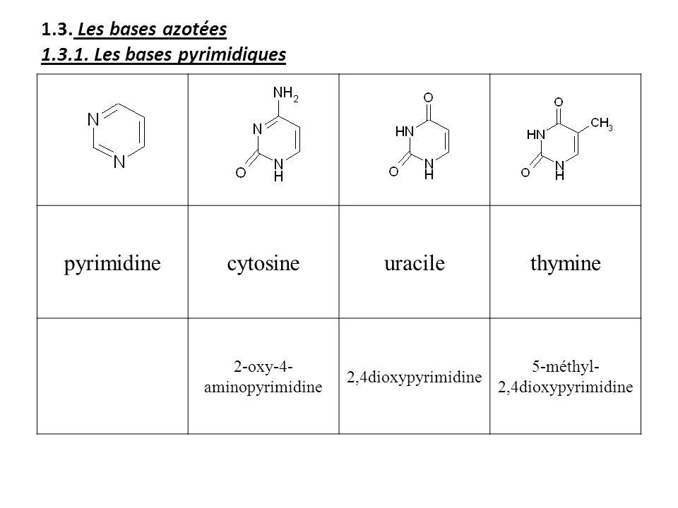 1.3. Les bases azotées 1.3.1. Les bases pyrimidiques pyrimidinecytosineuracilethymine 2-oxy-4- aminopyrimidine 2,4dioxypyrimidine 5-méthyl- 2,4dioxypy