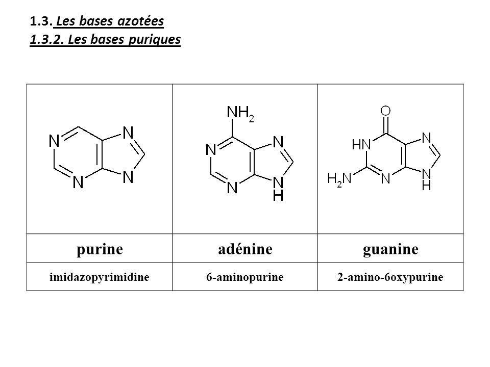 1.3. Les bases azotées 1.3.2. Les bases puriques purineadénineguanine imidazopyrimidine6-aminopurine2-amino-6oxypurine