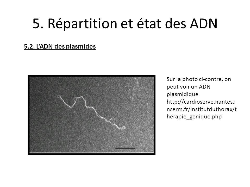 5. Répartition et état des ADN 5.2. LADN des plasmides Sur la photo ci-contre, on peut voir un ADN plasmidique http://cardioserve.nantes.i nserm.fr/in
