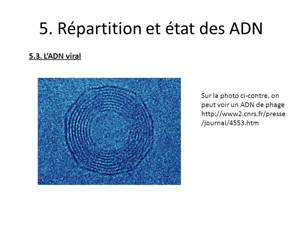 5. Répartition et état des ADN 5.3. LADN viral Sur la photo ci-contre, on peut voir un ADN de phage http://www2.cnrs.fr/presse /journal/4553.htm