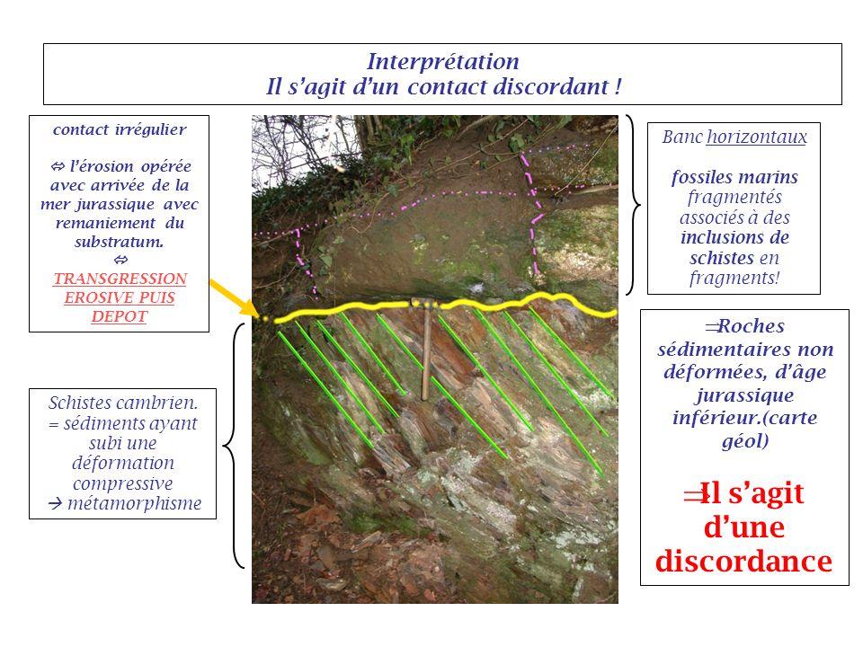 Interprétation Il sagit dun contact discordant ! Banc horizontaux fossiles marins fragmentés associés à des inclusions de schistes en fragments! Schis