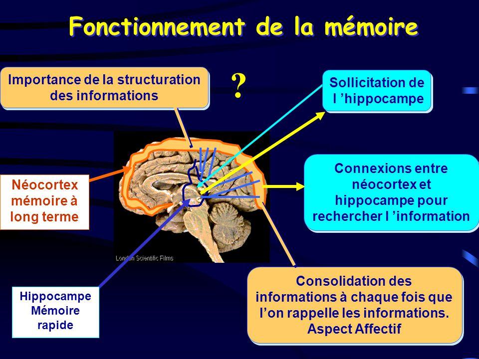 Fonctionnement de la mémoire Hippocampe Mémoire rapide Néocortex mémoire à long terme Sollicitation de l hippocampe Sollicitation de l hippocampe Conn