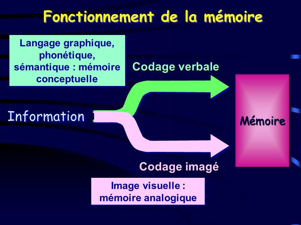 Fonctionnement de la mémoire Codage verbale Codage imagé Information MémoireMémoire Langage graphique, phonétique, sémantique : mémoire conceptuelle I