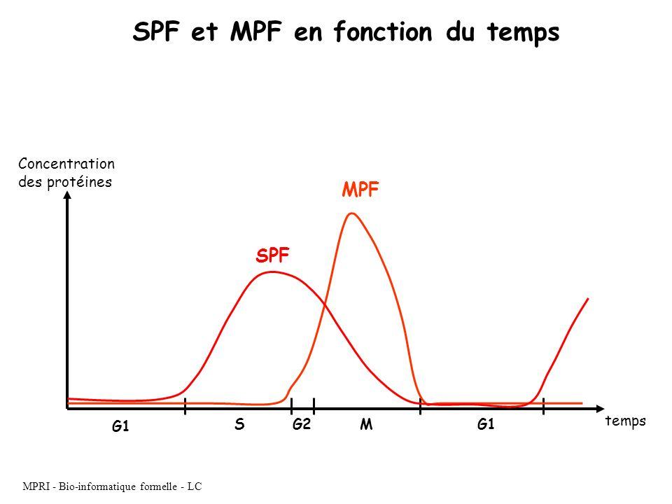 MPRI - Bio-informatique formelle - LC SPF et MPF en fonction du temps G1 SG2M MPF SPF temps Concentration des protéines