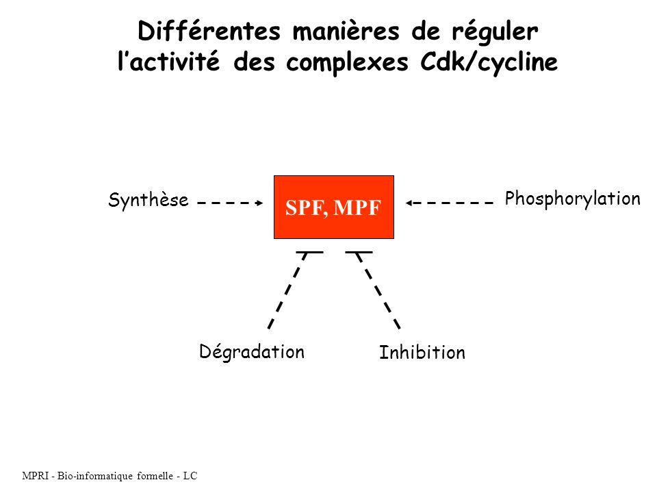 MPRI - Bio-informatique formelle - LC Différentes manières de réguler lactivité des complexes Cdk/cycline SPF, MPF Dégradation Inhibition Synthèse Pho